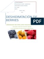 Deshidratación de Berries