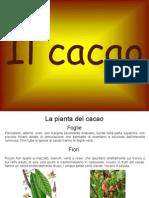 Scienze-cacao Diapositive PDF Ottavia