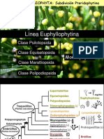 Clase 6 Pteridofitas -Monilofitas- 2016