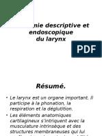 anatomie laringe