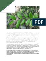 Droga Vegetal Contra El Parkinson