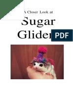 sugar glider booklet 1