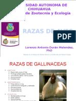 RAZAS DE AVES.pptx