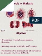Archivo Mitosis Meiosis