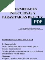 Enfermedades de Los Cuyes05