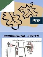 Urinogenital System