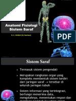 [Anatomi Fisiologi Sistem Saraf] (Bhamada Slawi)