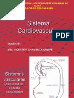 Sistemas vasculares