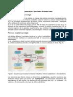 Bio Energetic A y Cadena Respiratoria