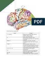 Area Brodmann Pada Otak
