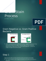 gram stain process  1