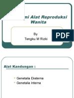 Anatomi Alat Reproduksi Wanita