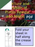 plants foldable final