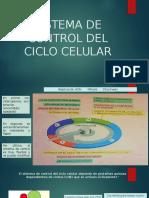 Sistema de Control Del Ciclo Celulara