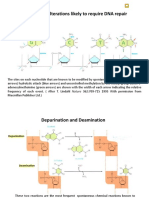 7 DNA Dmg and Repair