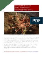 antedon-mediterranea/ comatule de Méditerranée
