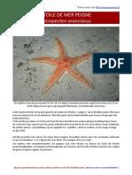 Astropecten aranciacus-etoile de mer peigne