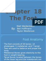 Ch.18 The Foot