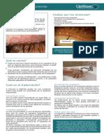 Blefaritis Definicion y tratamiento