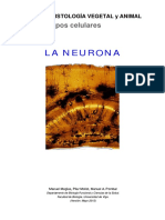 Neuronas 2