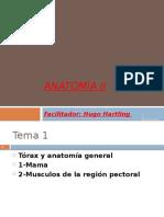 1-1c-Torax, Region Pectoral; Mama y Musculos Region Pectoral - Copy