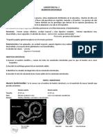 Laboratorio parasitologia