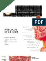 Anatomia Boca Musculos