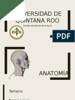 Anatomia Borrador