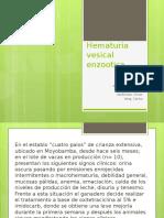 Hematuria Vesical Enzootica (2)