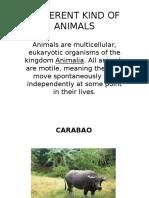 DIFFERENT KIND OF ANIMALS.pptx