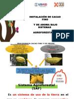 Instalacion Del Cacao en Un Saf