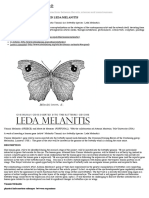 A HUMANISED BUTTERFLY NAMED LEDA MELANITIS | Interalia Magazine