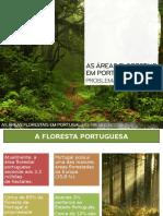 As Áreas Florestais Em Portugal - Problemas e Soluções