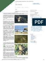 Las Aves Que Habitan El Cañón Del Colca _ Valle y Cañon Del Colca