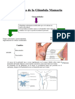 histologadelaglndulamamaria-121029220335-phpapp02.doc