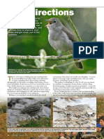 New Directions 1 - Birdwatch