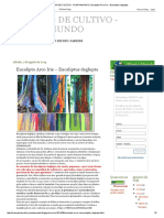 MANUAIS DE CULTIVO - PLANTAMUNDO_ Eucalipto Arco Iris – Eucaliptus deglupta.pdf