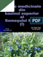 Plante Medicinale Din Bazinul Superior Al Somesului Mare(I)