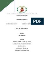 MICROBIOLOGIA- micorrizas