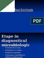 Fusobacterium.ppt