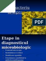 Mycobacterium leprae Petrusan Sorina.ppt
