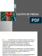 Cultivodefresas 150321103716 Conversion Gate01