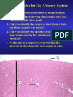 Urinary Histology Slide