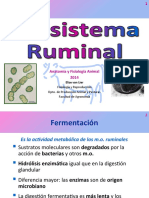23 1Ecosistema-Ruminal