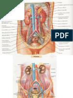 Anatomia Sistema Reproductor