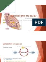 Metabolismo Muscular