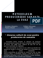 Metodologia Producerii de Samanta La Ovaz