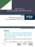 Práctica 12. Metabolismo de Nitrogeno Revisado - Copia