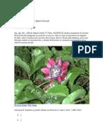 003_Trabajo de Ciencias Sociales Flor Nacional Mburucuya