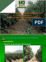 EVALUACION EN PALTO ANGEL AREVALO.pdf